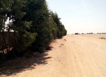 مزرعة 15 فدان مميزة جدا بالإسماعيلية بجوار جمعية الإسماعيلية