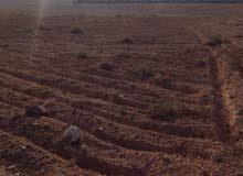 ارض زراعية 76دونم تربة حمراء للبيع بسعر مميز في الشوبك