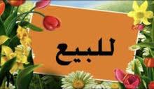 بغداد الحريه