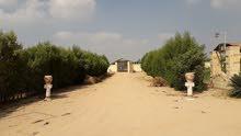 ارض للايجار علي طريق اسكندريه الصحراوى