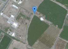 مزرعة قائمه للبيع جنوب الشارع العام بولاية السويق 21 فدان