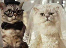 للزواج وليس للبيع