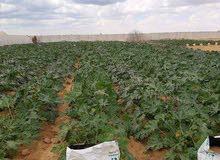 للبيع اراضي مزروعه وغير مزروعه وكامله المرافق والخدمات