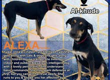 Dog for adoption - كلب للتبنى