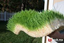 اعلاف خضراء طازجة ذات قيمة غذائية عالية