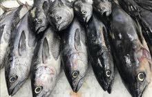 ابحث عن شريك في مشروع بيع الاسماك