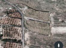 ارض 10دونم للبيع في معربا ريف دمشق واوتستراد معربا