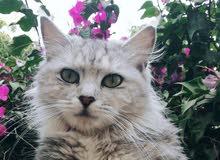 قطه جميلة سارعو عليها