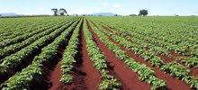 مزرعه 10 فدان ع طريق اسيوط الغربي للبيع