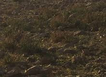 قطعة ارض للبيع في شفا بدران حوض مرج الأجرب قرب دوار الكوم من المالك