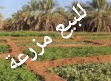 للبيع مزرعة