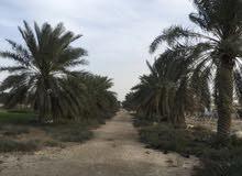للإيجار مزرعة في الجبيل راس الغار