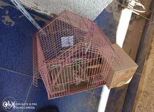 2 قفص طيور + 1 قفص حمام كلهم بسعر 120 ج حالتهم جيده جدا استخدام بسيط