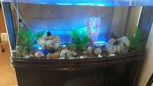 حوض سمك ياباني