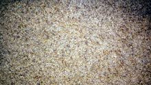 Cairo - Used Carpets - Flooring - Carpeting available for sale