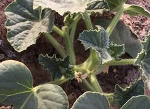 مزرعة للبيع في شط العرب