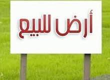 ارض للبيع منطقة فلسطين