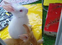 bunny's with cge food all