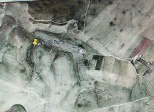ارض 15 دونم في مادبا ذيبان فلحة