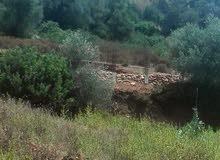 ارض للبيع بي ولاية تيبازة الناضور منطقة سيدي موسى