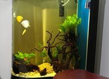 kakei Aquarium