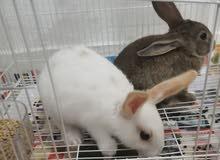 small Rabbit 2 pcs
