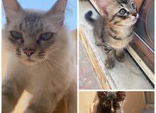قطط لتبنب        cats for adoption
