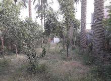 مطلوب ارض زراعيه في بابل مساحتها دونم أو اقل بسعر مناسب
