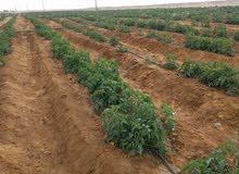 فرصة عظيمة للاستثمار الزراعي والداجني امتلاك مزرعة