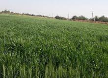 مزرعةللبيع في اسوان وادي الصعايدة