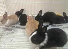 ارانب جميلة للبيع