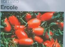 خضارة طماطم شريحة