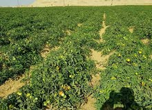 ارض للبيع تقسيمات ومزارع وإنتاج حيوانى وداجنى وكثير من المشروعات