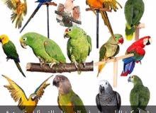 تدريب الطيور 052 551 0552