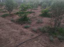 أرض طابو للبيع مساحتها 548.70 متر مربع في حي الزيتون الحضري
