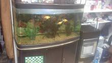 الزرقاء حوض سمك اجنبي والسعر مغري جدا
