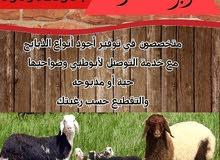 أبو خالد للذبائح