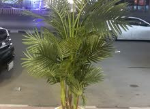Natural and Artificial Plants in New condition for sale