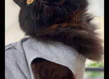 قطط بيور بارخص الاسعار