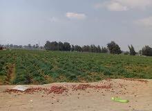 مزرعة 90فدان زراعية قابلة للتجزئة- هذا العقار بمصر