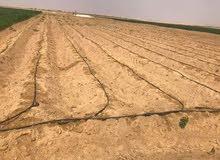 ارض زراعيه للبيع تتميز بموقع ممتاز وسط المزارع وموقع حيوى
