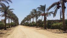 ارض في منتجع الفردوس الريفي السياحي شمال بحيرة قارون و بالتقسيط