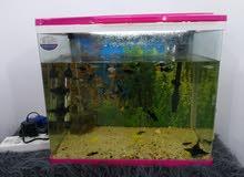 حوض أسماك كامل