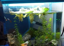planted aquarium for sale