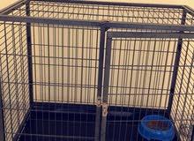 big clean cage