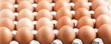 بيض فرنسي مخصب للتفقيس