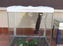 أحواض سمك صغير وكبير الكبير معاه فلتر تنظيف الأكسجين