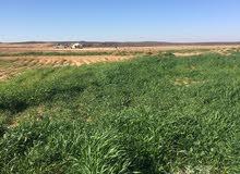 اراضي للبيع في محافظة المفرق الخضراء
