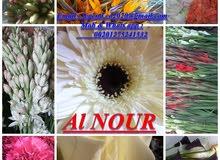 زهور قطف من شركة النور بمصر