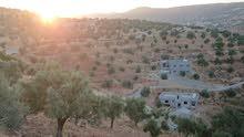 ارض ز اعيه وسكنيه مساحتها أربعة دنمات وثلاثمئة متر مخدومه بشوارع وكهرباء